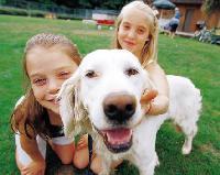 Kids &Dogs